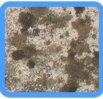 Water-Mold-Removal-Tinley-Park